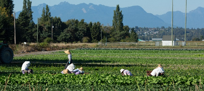Temporary migrant workers: List of trusted resources and advice